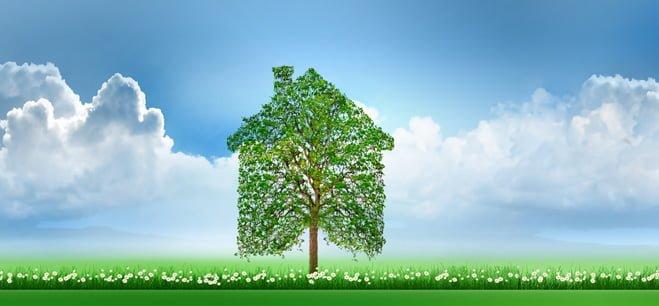 Groene woningboom